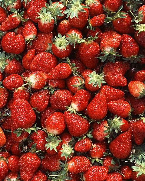 479px-Chandler_strawberries