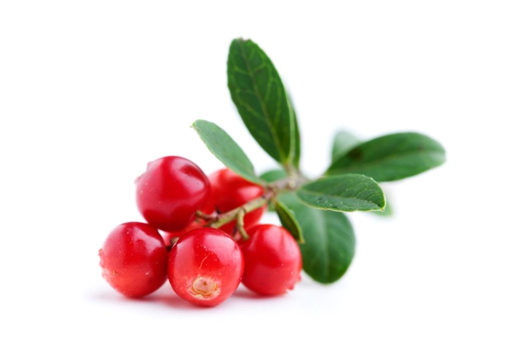 Russian berries | IQF Frozen berries | Lingonberry | World of Berries